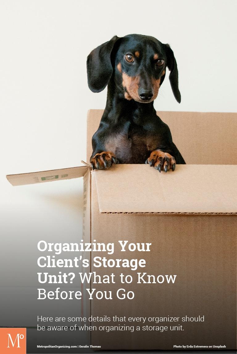 black and brown dachshund dog in a cardboard box